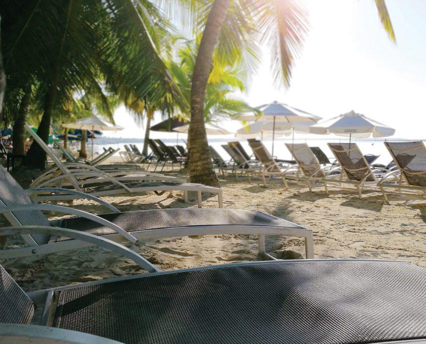 El Puerco Rosado Playa